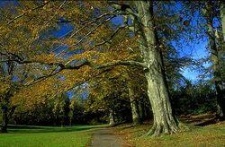 Singleton-park